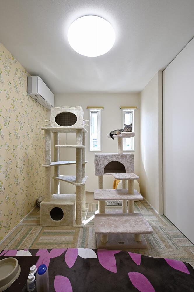 アメリカンショートヘアの猫ちゃんのお部屋。こちらの壁紙は愛らしい花模様。